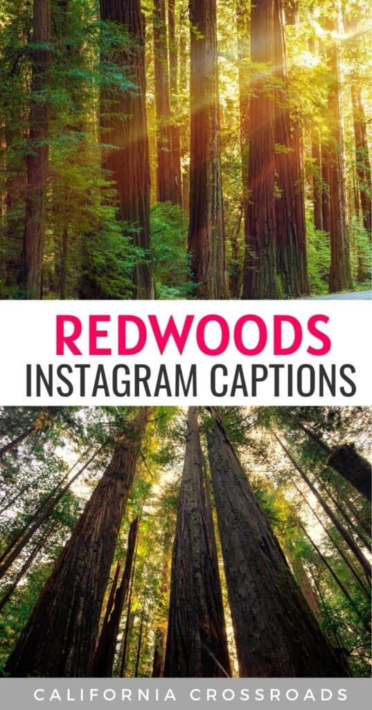 Visiting the Redwoods in California? Whether you're visiting Redwood National Park, Yosemite, Sequoia, Kings Canyon, or any of the other redwood forests in California, here are some beautiful redwood quotes to inspire you! Redwood tree tattoo inspiration | Redwood forest wedding inspiration | Redwoods California | Redwoods national park photography | Redwoods elopement quotes | Redwoods wedding quotes