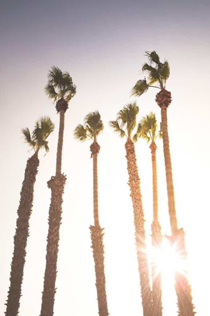 Sunburst of setting sun behind tall palm trees on a California boulevard