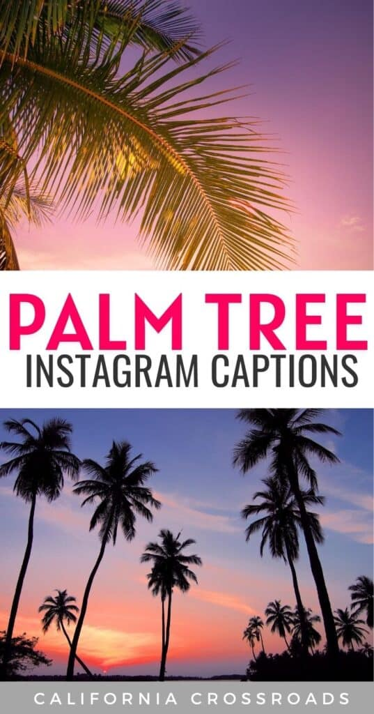 Snapping some photos of palm trees? Here are the best palm tree Instagram caption ideas!