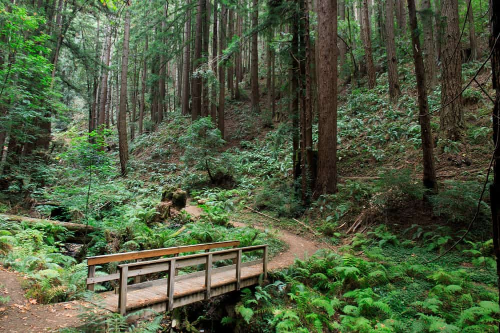 bridge leading to a redwood forest in the northern california landscapes