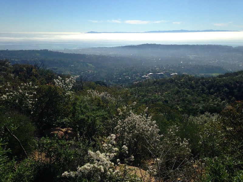 View from top of peak towards Pacific Ocean with greenery and white flowers in foreground from the vantage point of a favorite Santa Barbara hike