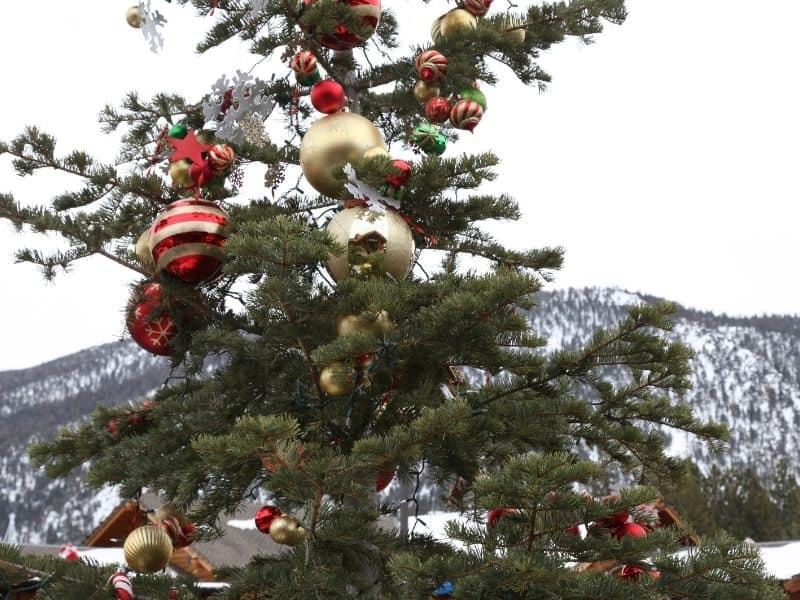 A Christmas tree at a ski resort in California's Lake Tahoe area.