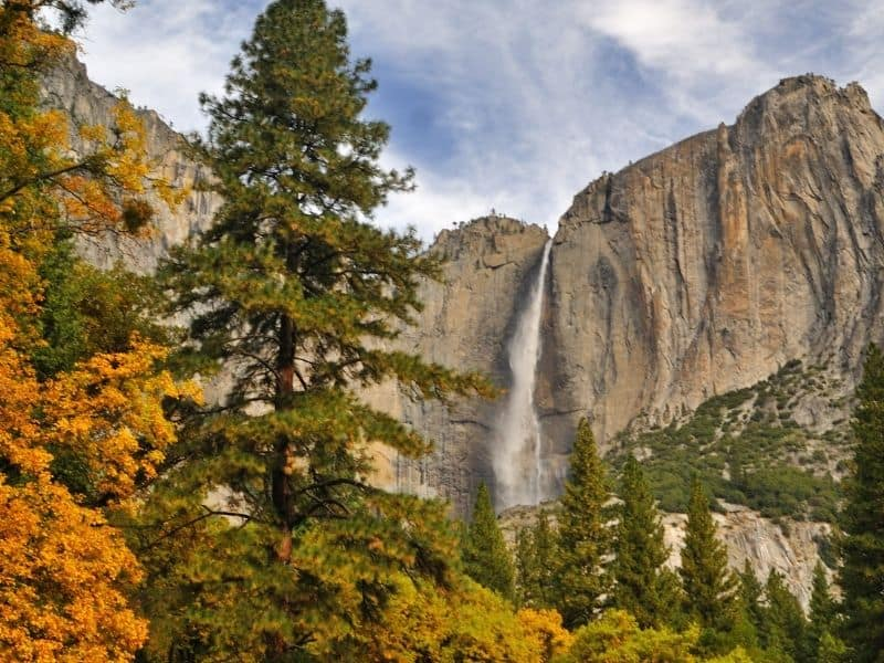 Yosemite waterfall with pine tree and orange foliage in foreground