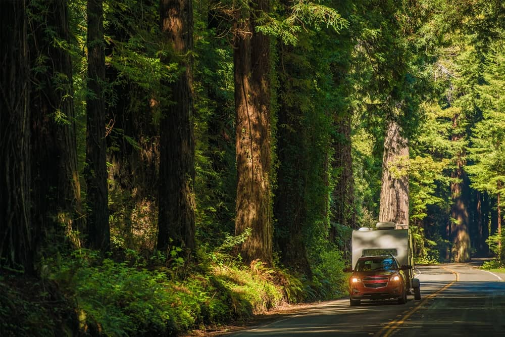 Red car carrying a small tan camping trailer on a two-lane highway with giant redwood trees on each side of the highway.