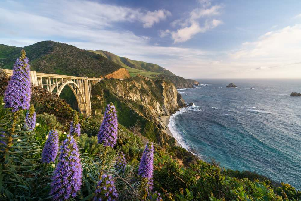 The famous arch bridge of Bixby Creek Bridge in Big Sur, next to the Pacific Ocean, with several wild purple lupine flowers in front of the shot.