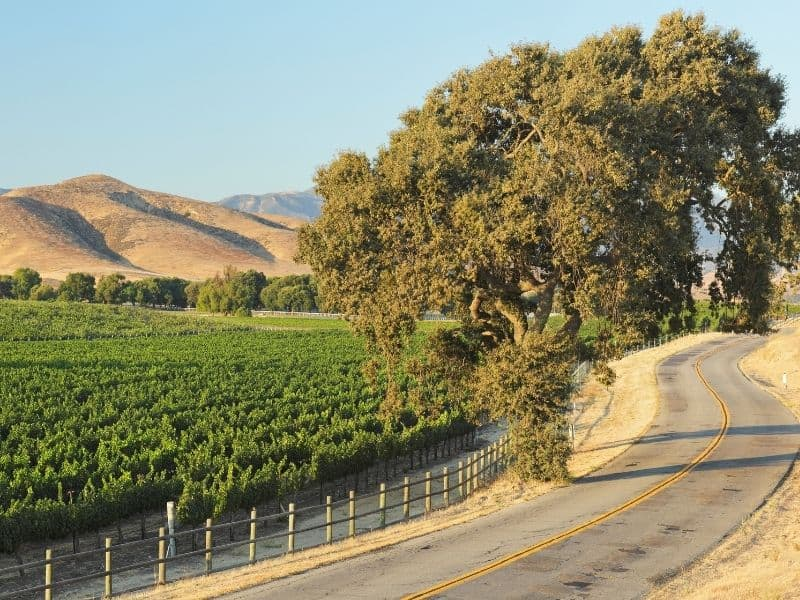 A curvy countryside two-lane road leading past Santa Barbara wine country with full grape vines, rolling hills, and beautiful trees.