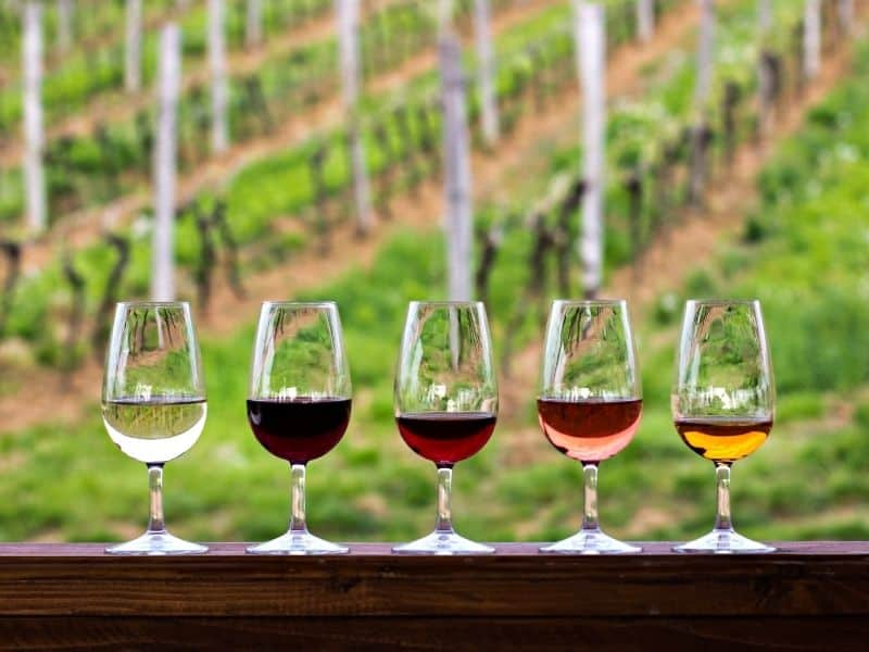 A view of five wine glasses holding white, rose, and red wine tasting portions with a bokeh blur of vineyards in the background.