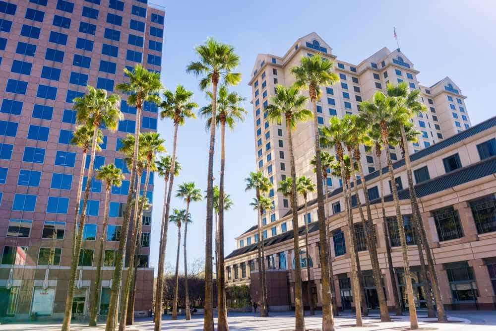 palm trees on a street in san jose skyline