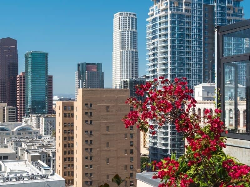 View from a Los Angeles rooftop with skyscrapers in the background and red flowers in the foreground.