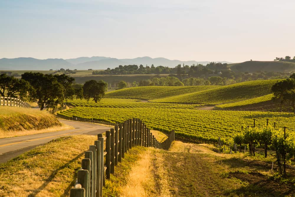 Late afternoon sunlight casts a golden glow over a beautiful Santa Ynez Valley winery in Santa Barbara County, with a fence, several oak trees, and tons of hills of rolling vineyards.