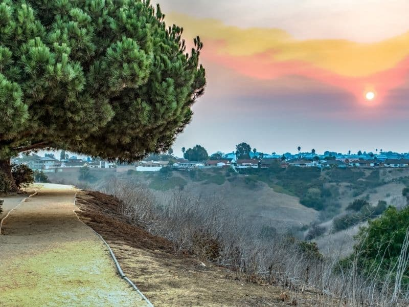 A tree on a path, with a view of houses in LA and palm trees in the distance, as the sun sets over Los Angeles