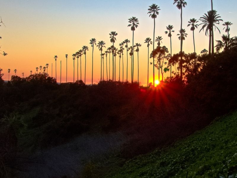 Hill with several palm trees on it with the setting sun creating a sunburst at the horizon line between some palm trees, in an orange Los Angeles sunset sky.