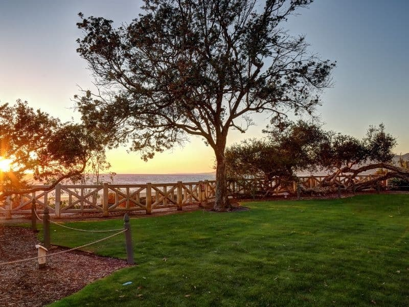 Green lawn with trees in the park, with a view of the beach behind it with the sun setting into the ocean horizon, creating a beautiful beach sunset in Los Angeles