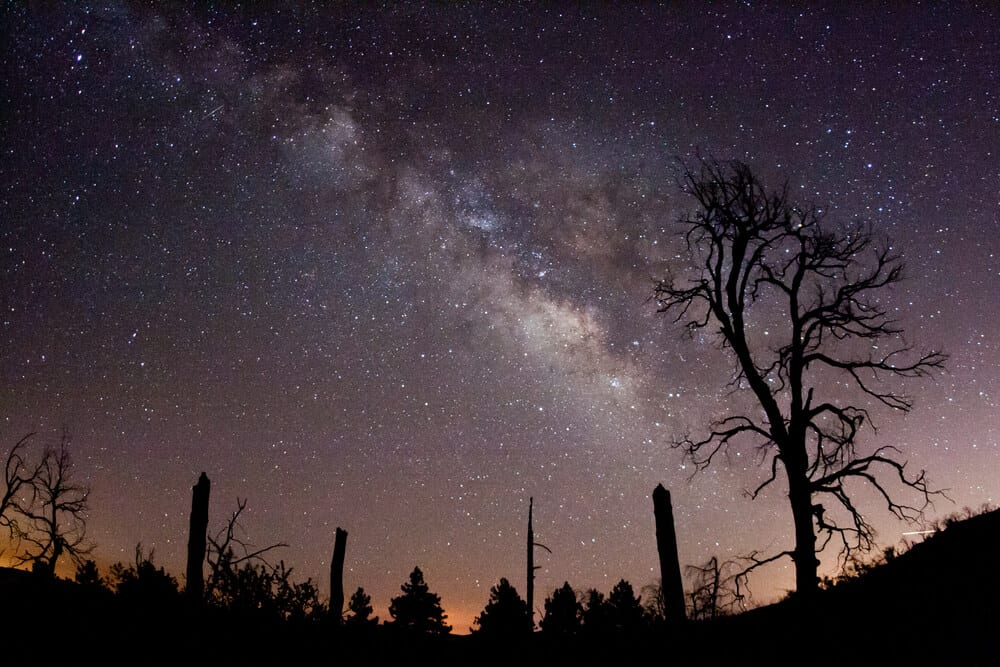 Milky way seen from above the spot where people are camping near San Diego, silhouette of trees in the landscape