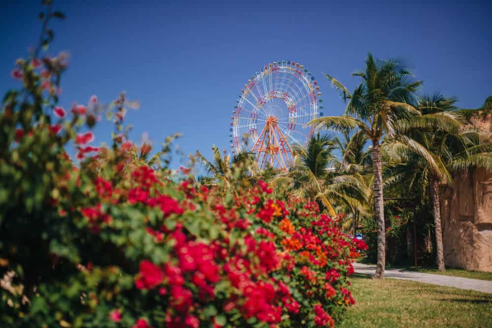 A bush full of pink flowers in a park, with palm trees and a pink and white giant Ferris wheel in the distance on a blue sky day in Anaheim, a popular LA weekend getaway