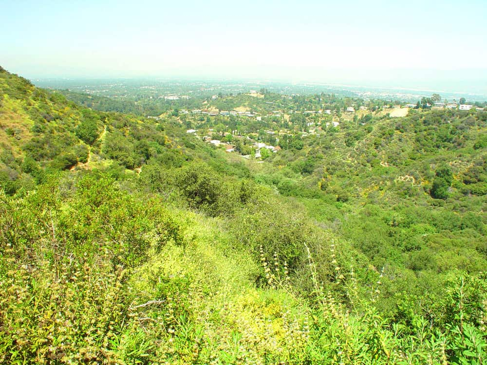 Brilliant green grass and plant life over the view of the city below it in the distance on a popular Los Angeles hike.