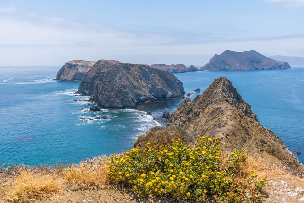 View from Inspiration Point on the Channel islands National Park: bush of yellow flowers, rocky islets out in the Pacific Ocean.