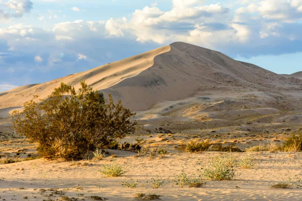 Pale yellow-brown sand dunes against a pale, cloudy sky with desert brush and flora.