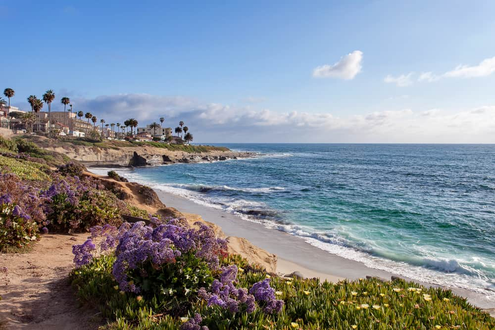 The blue ocean next to wildflowers in purple and white in San Diego