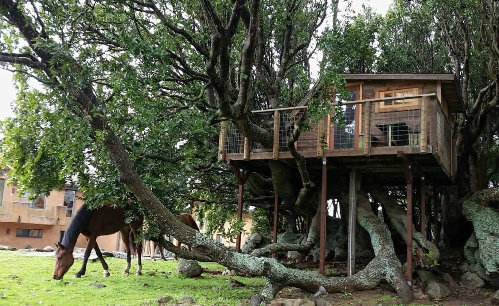 A horse grazing in front of a treehouse surrounded by branches and grass.