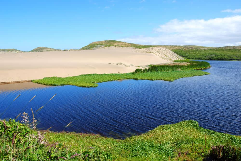 The endpoint of this easy Point Reyes hike is Abbotts Lagoon, a gorgeous lagoon with sand dunes, green vegetation on the water, and grass banks of the waterfront.