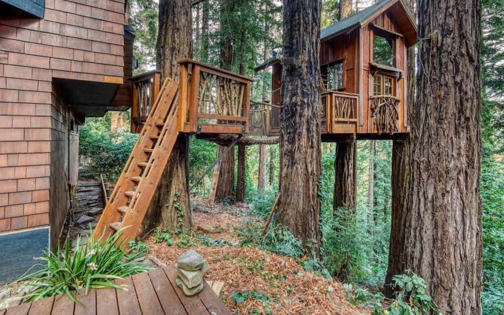 Treehouse built amidst coastal redwoods in a redwood forest north of San Francisco