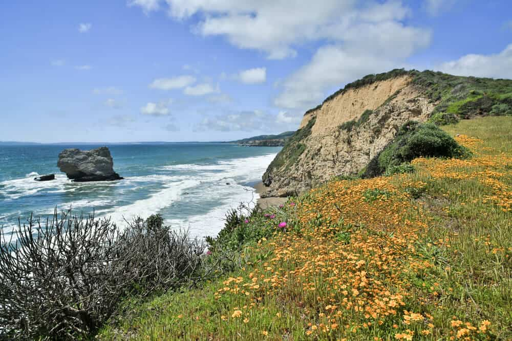 Hike along the coast of Point Reyes, amongst poppies and meadows, looking out onto the Pacific Ocean from the cliff bluff trail in Point Reyes National Seashore.