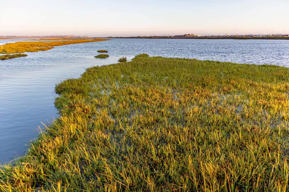 Sunset on the Bolsa Chica Wetlands, showing green grass and marshland with blue water rippling in the ocean breeze.