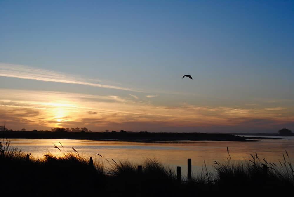 Hikshari' trail at sunset, with one bird flying towards the horizon, with marsh grasses on the side of the water