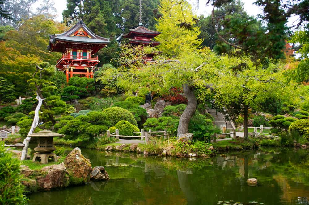 Green oasis in the Japanese Garden in the Golden Gate Park, with red Japanese pagodas emerging from the green spaces.