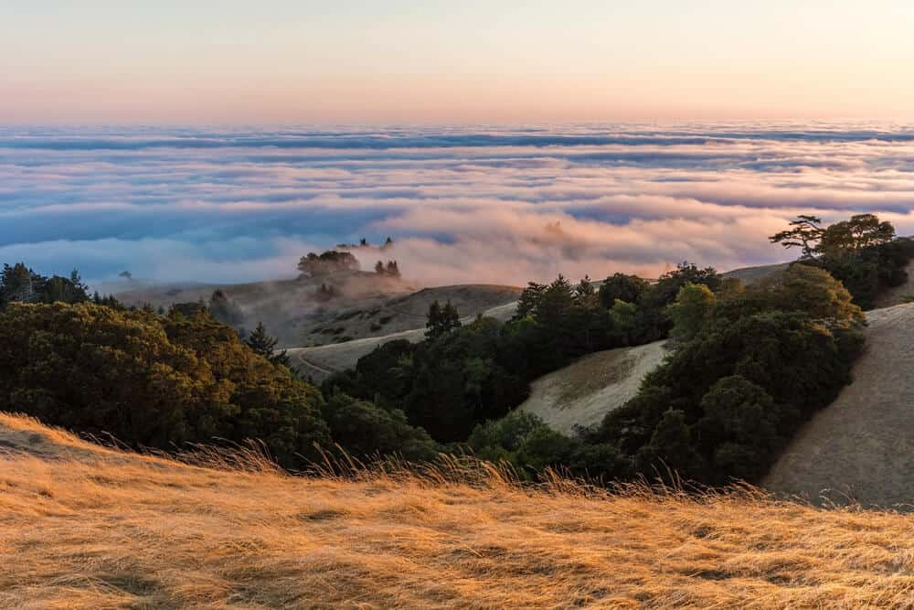 View from Mt Tamalpais of fog rolling in at sunset, covering the view below, showing only some hills, trees, and grass