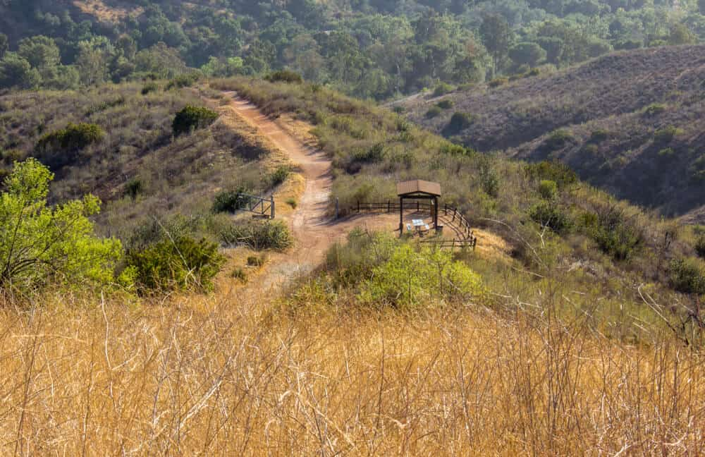 A hike in the Santiago Oaks Regional Park in Anaheim, California, amidst yellow grass and green trees with a view of a trail and a picnic table in the distance.