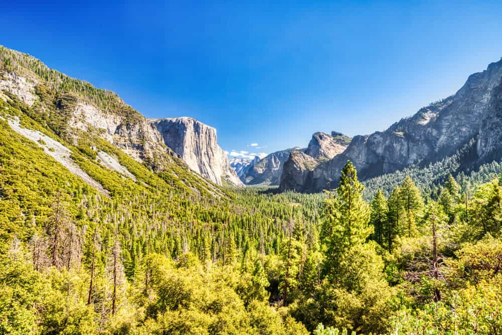 The famous valley area of Yosemite, with evergreen trees in a valley during midday light, surrounded by granite half cliffs.