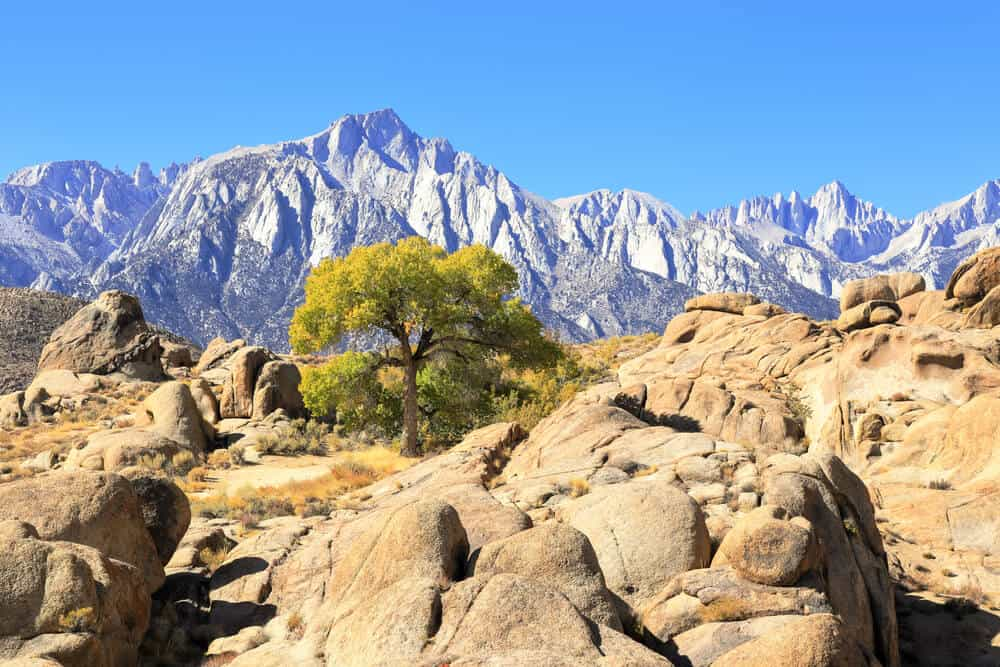 Rocky landscapes in beige and brown at the Alabama Hills, with a tree in the center, with the high peaks of the Eastern Sierras in the background.