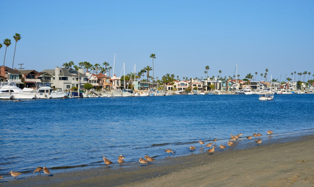 beach with birds on the shore on alamitos bay with fancy houses and yachts on the other side of the beach