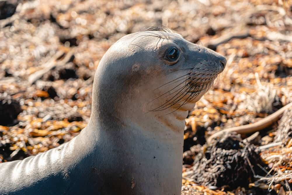 Close up of a cute baby sea lion on the shore in California