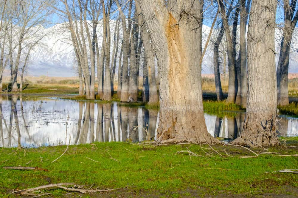 Grass and tree trunks next to a lake in the city park of Bishop, a must visit road trip stop along Highway 395
