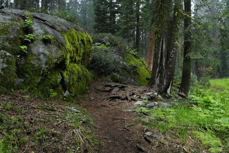 trail of the sequoias along the crescent meadow area