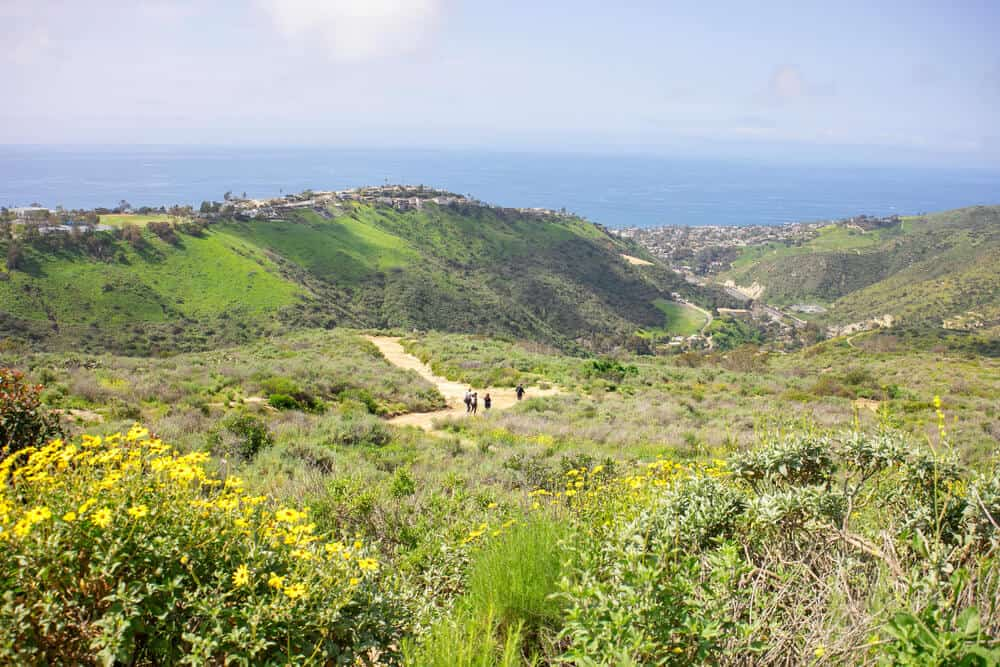 People hiking amidst green fields and yellow wildflowers in Laguna Beach with a view of the ocean.