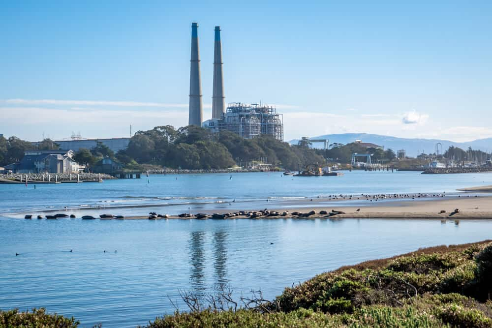 Harbor seals and seagulls rest on a protected beach at Moss Landing Harbor, with the natural gas powered Moss Landing power plant and its smoke stacks in the background.
