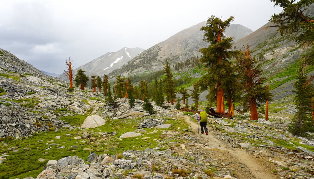 Person with green backpack hiking on trail amongst tall trees, perhaps sequoias, in the mountains along the John Muir Trail