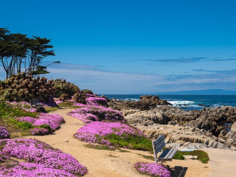 Image of Monterey coastline trail with bench and pink flowers and ocean