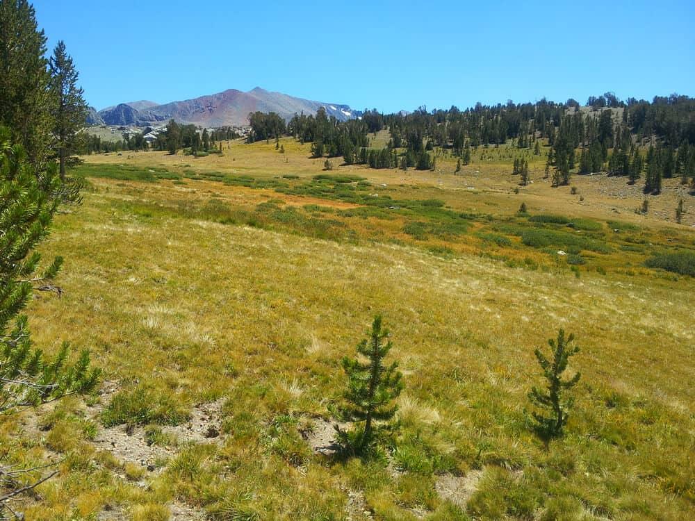 View of Tuolumne Meadows grasslands and distant Sierras