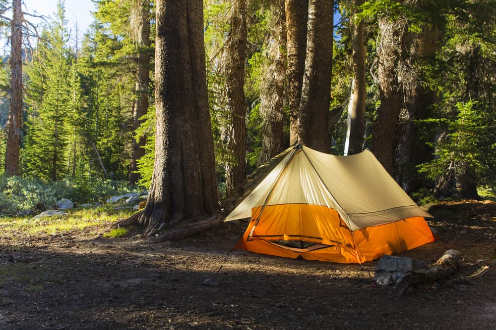Orange tent in a pine forest along the John Muir Trail