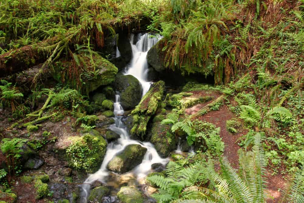 a waterfall in the redwood national park complex