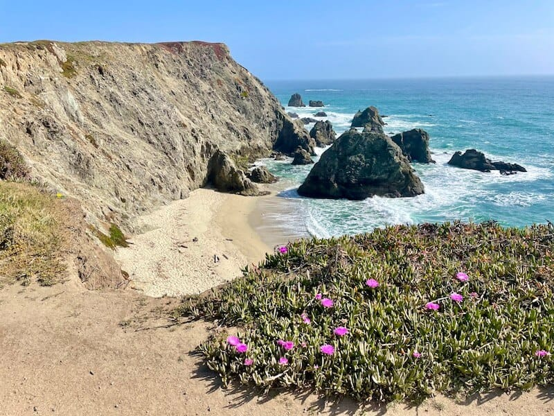 the rocks and beaches of bodega head with purple flowers