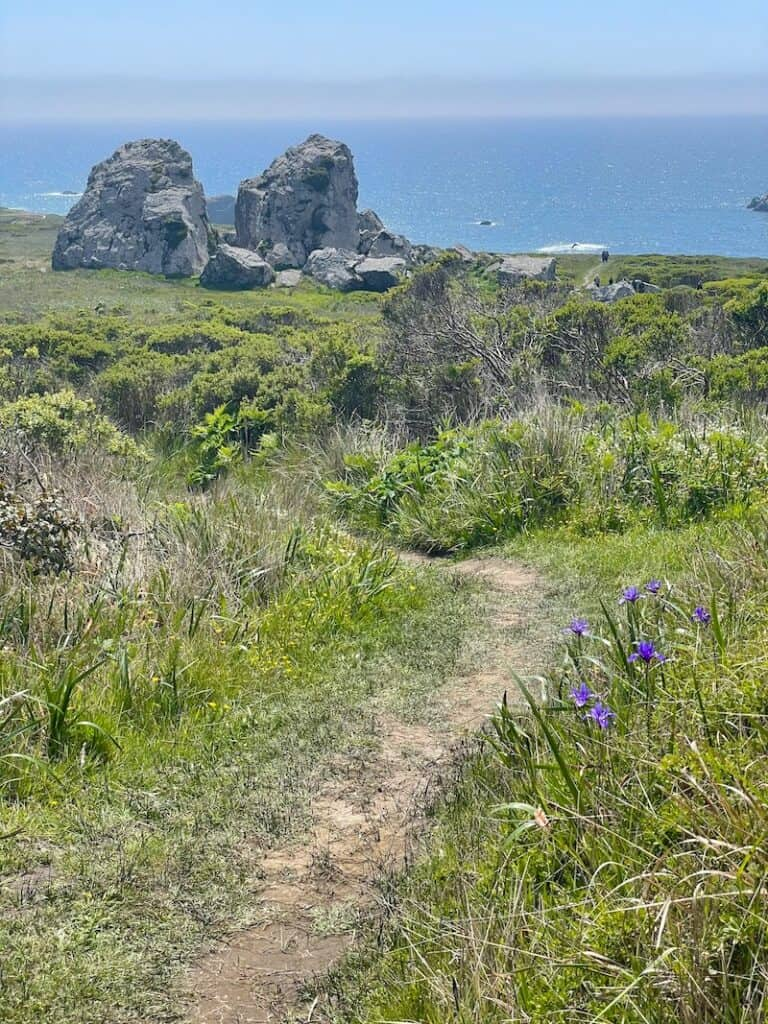 a few purple irises and two large boulders on the kortum trail with the pacific in the distance