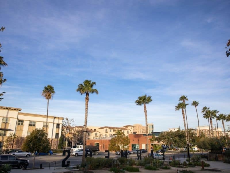 palm trees in anaheim california in the afternoon