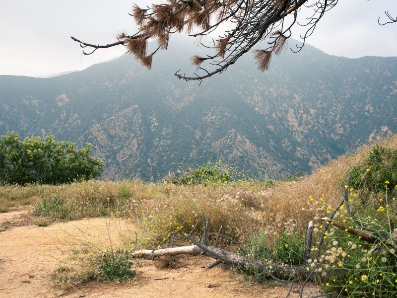 eaton canyon is a popular bat-seeing destination in california
