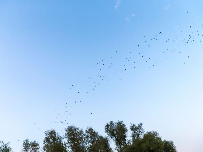 a row of bats flying through the air over the trees